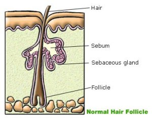 What is Sebum?  It's More Interesting Than You Think